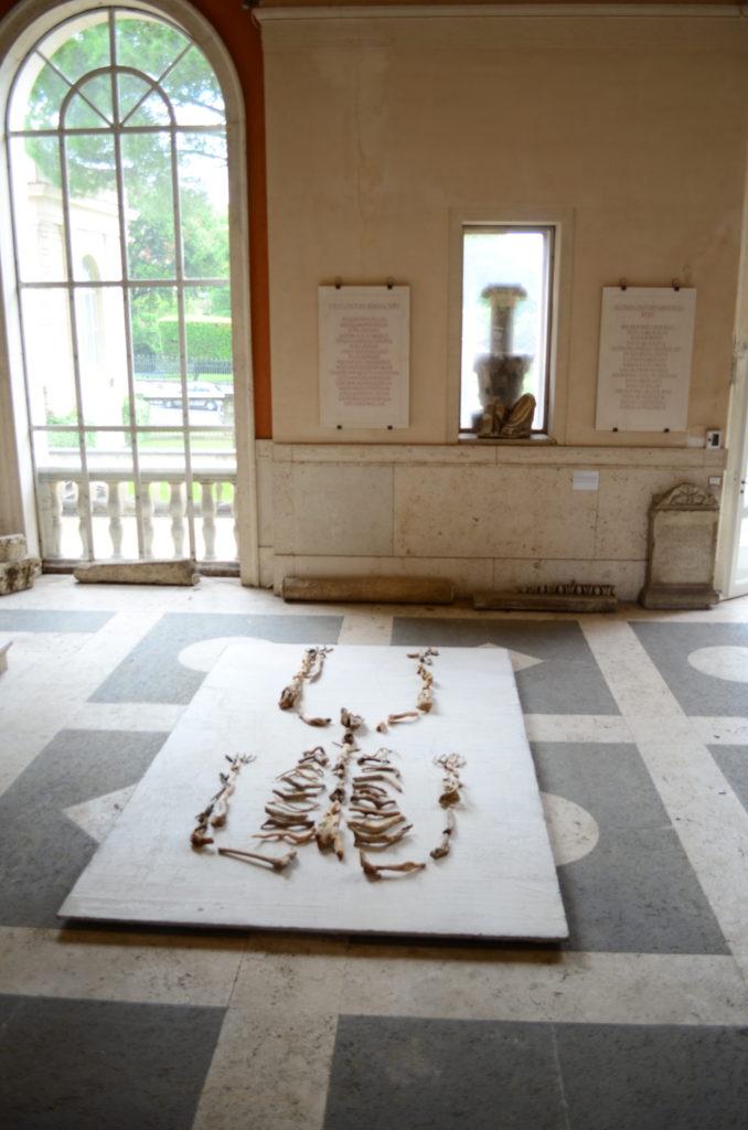 Sissi Accademia americana Roma